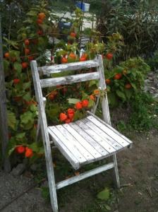 Lokakuun loistoa puutarhapalstalla
