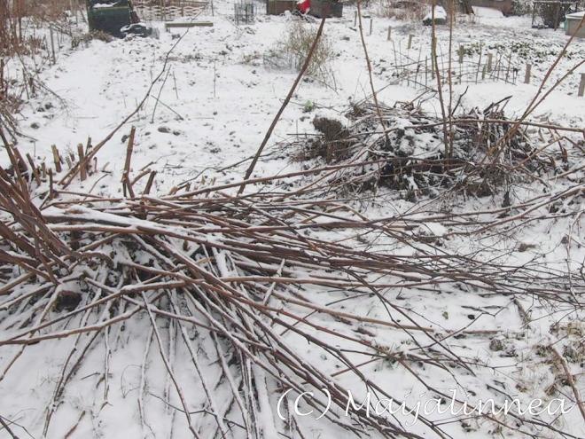 Puutarhapalstalla tammikuussa